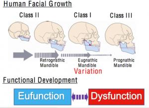 Corso-PP-Dental-Sadao-Sato-crescita-facciale-delluomo-e-sviluppo-funzionale-del-cranio